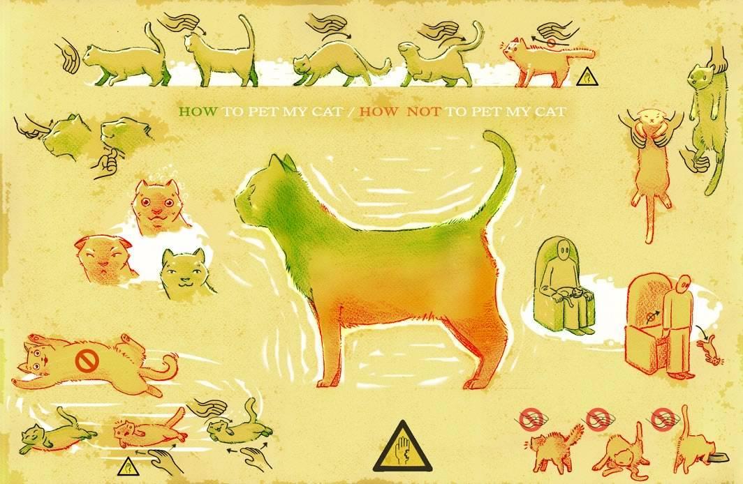 Как делать кошке массаж | кошки и собаки вики | fandom