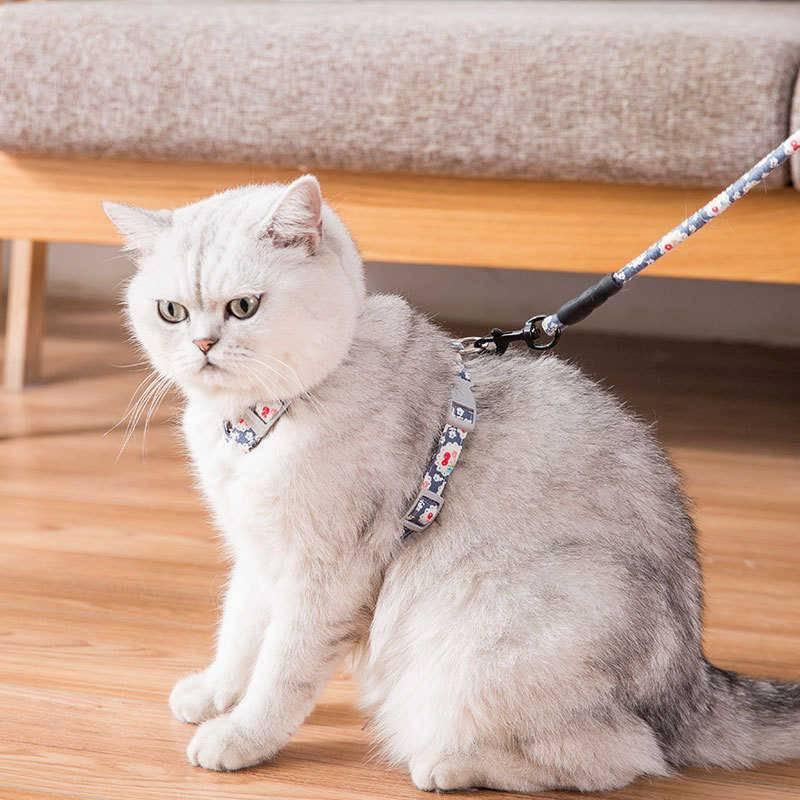 Шлейка и поводок  для кошки — аксессуары для прогулки и поездок