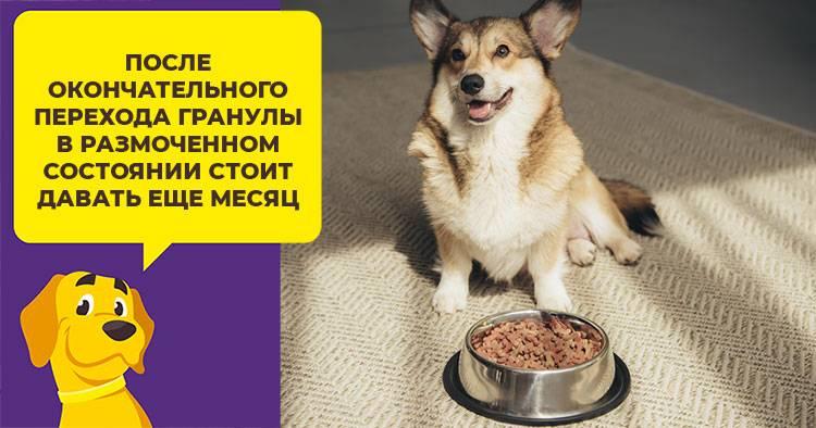 Правила выбора сухого корма для собаки