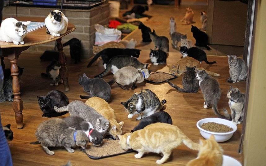 Что боятся кошки? 6 вещей кошки боятся и как помочь им преодолеть эти страхи