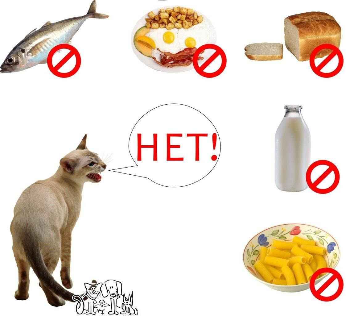 Чем и как правильно кормить кошку