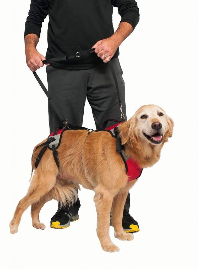 Как правильно одеть шлейку на собаку: пошаговая инструкция, фото, видео