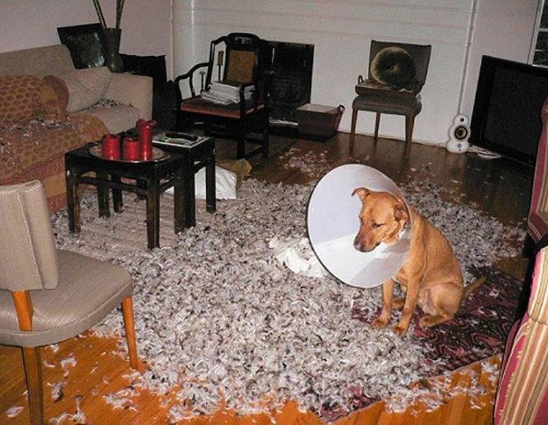 Почему у некоторых людей не приживаются домашние животные? плачу... - страна мам