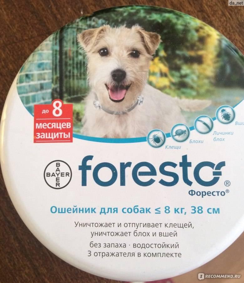 Ошейники от блох и клещей для собак: преимущества и недостатки, средние цены, а также лучшие предмтавители