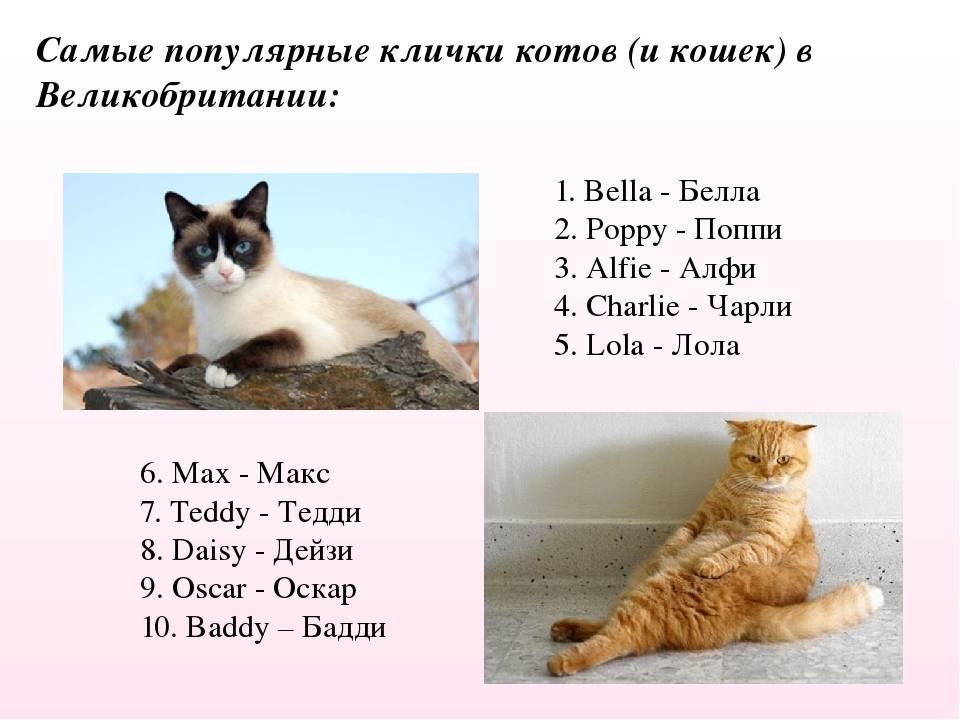 Необычные клички для кошек и котов на русском, японском и английском языках с переводом