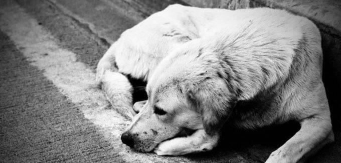 Почему собака ничего не ест и не пьет и что при этом нужно делать?