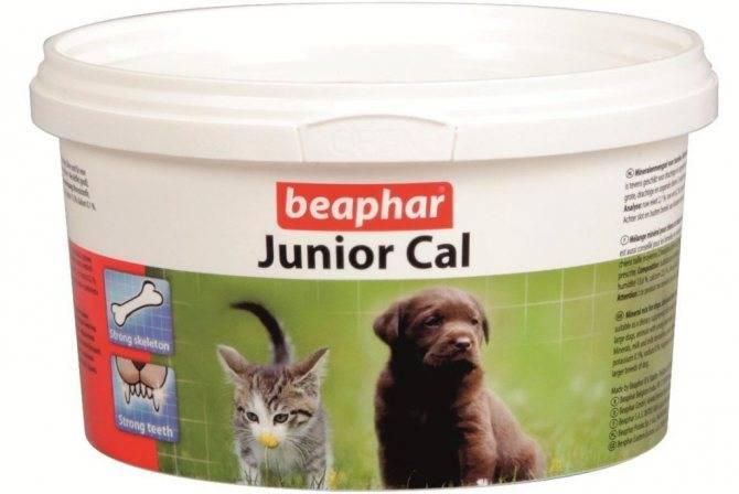 витамины для кошек и котят: какие необходимы и как давать, отзывы