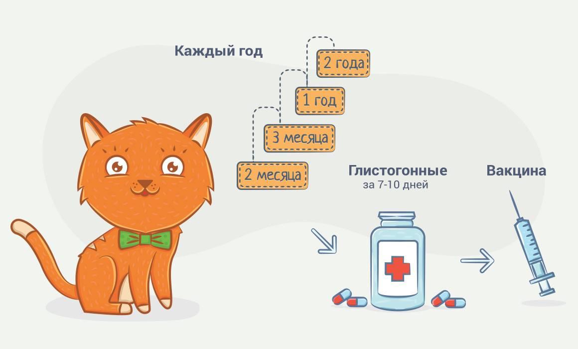 Какие прививки делают котятам и когда