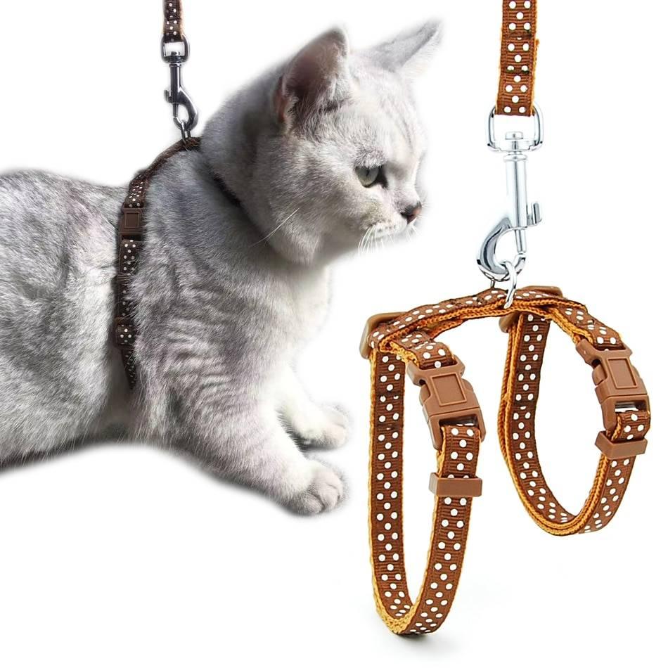 Как выгуливать кошку или кота на улице: советы владельцам