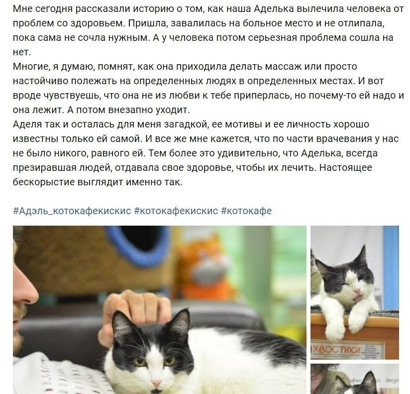 Какой должна быть нормальная температура тела у кошек и котов: как померить, что считается нормой, причины отклонений и первая помощь