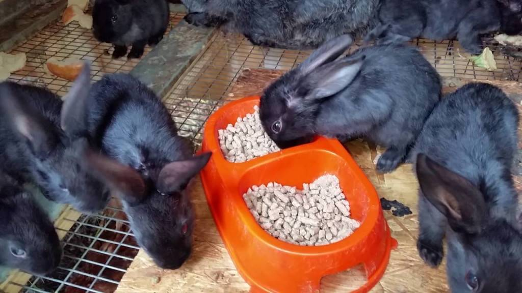 Понос у кроликов: причина, лечение, что делать? как и чем лечить?