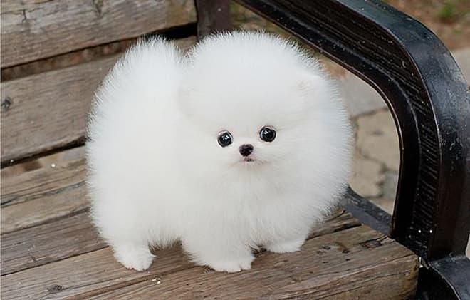 Самые милые собаки в мире – топ-10 пород с описанием