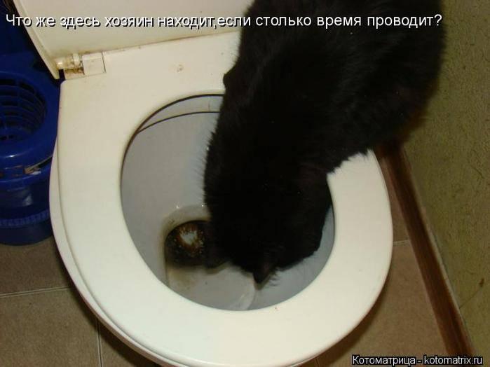 Почему собака много пьёт воды и часто ходит в туалет (причины и лечение)