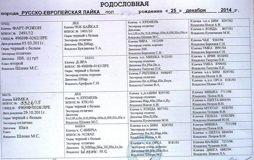 Имена для русско европейской лайки. клички для собак породы лайка: основные секреты выбора