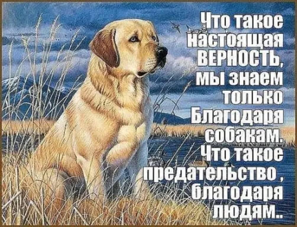 Верные собаки: породы, характер, описание, особенности