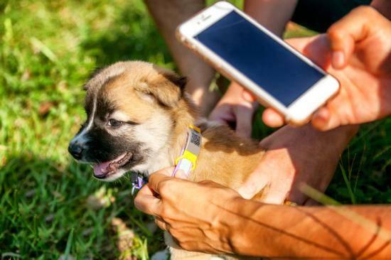 Как найти собаку по чипу: схема действий при потере питомца