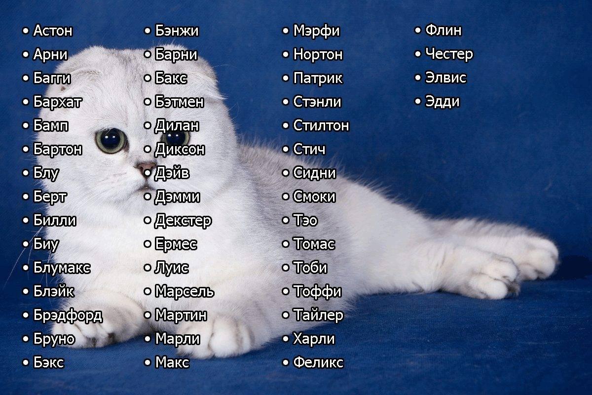 Как назвать черного котенка мальчика или девочку - список лучших кличек