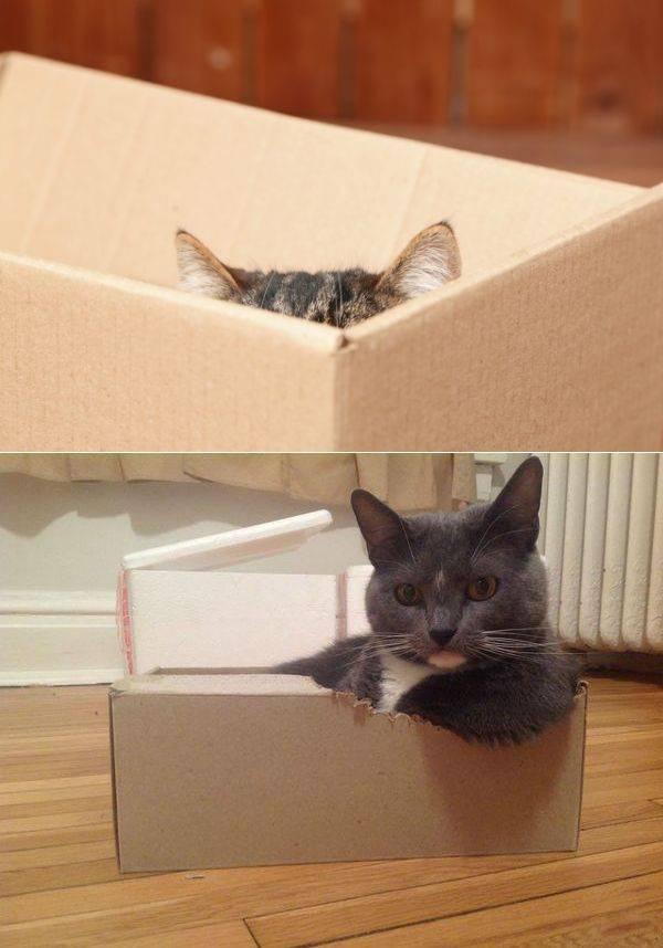 Почему кошки любят коробки? причины, фото и видео  - «как и почему»