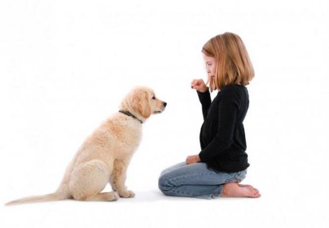 Кот и собака в одном доме: как подружить питомцев - лайфхакер
