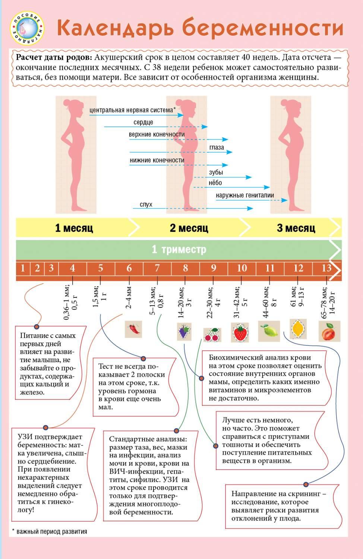 Беременность кошки: течение процесса и признаки по неделям