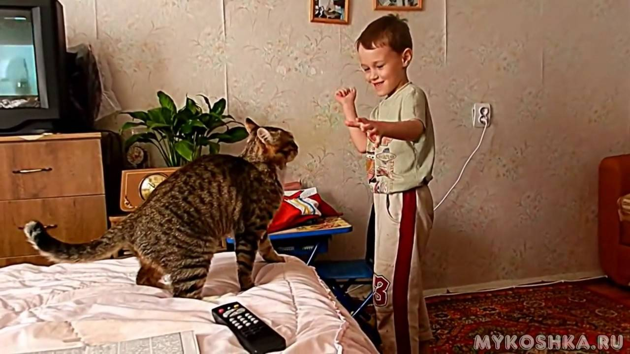 Лучшие способы отучить котенка кусаться и царапать хозяев