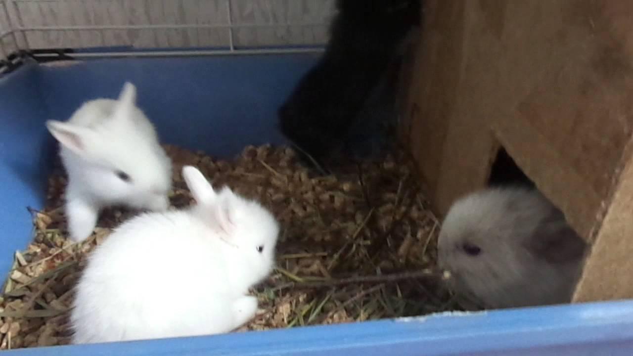 Как крольчиха кормит крольчат: фото и видео