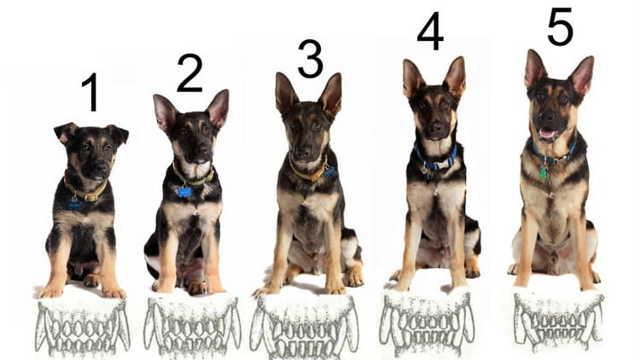 Как определить возраст собаки: эффективные методы (по зубам, шерстяному покрову, глазам)