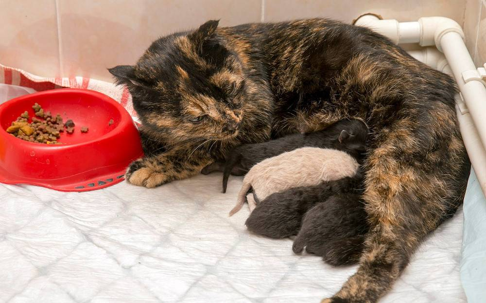 Чем и когда кормить кошку в первые дни после стерилизации: правильный рацион по дням