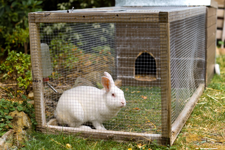 Содержание кроликов: в клетках, шедах, яме, вольерное содержание