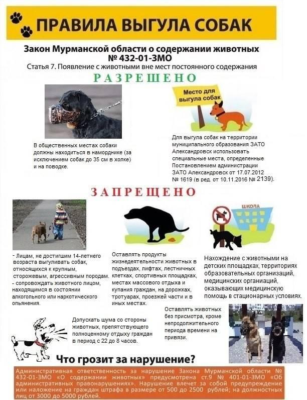 Новые правила содержания домашних животных в 2019 г.