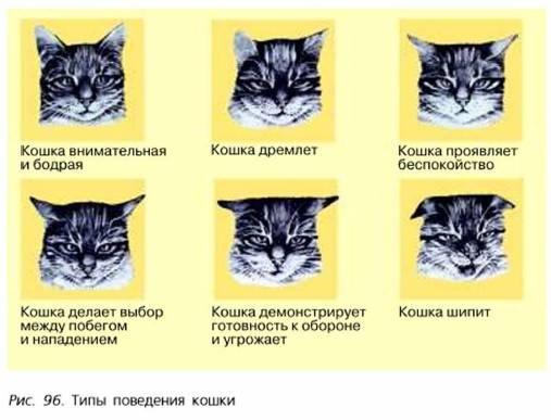 Как отличить кота от кошки, определить пол котенка: фото и видео