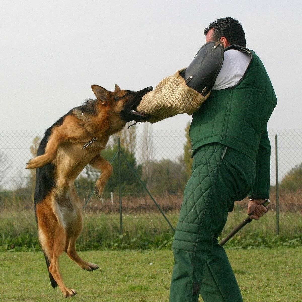 Рекомендации по дрессировке и советы обучению командам взрослой собаки