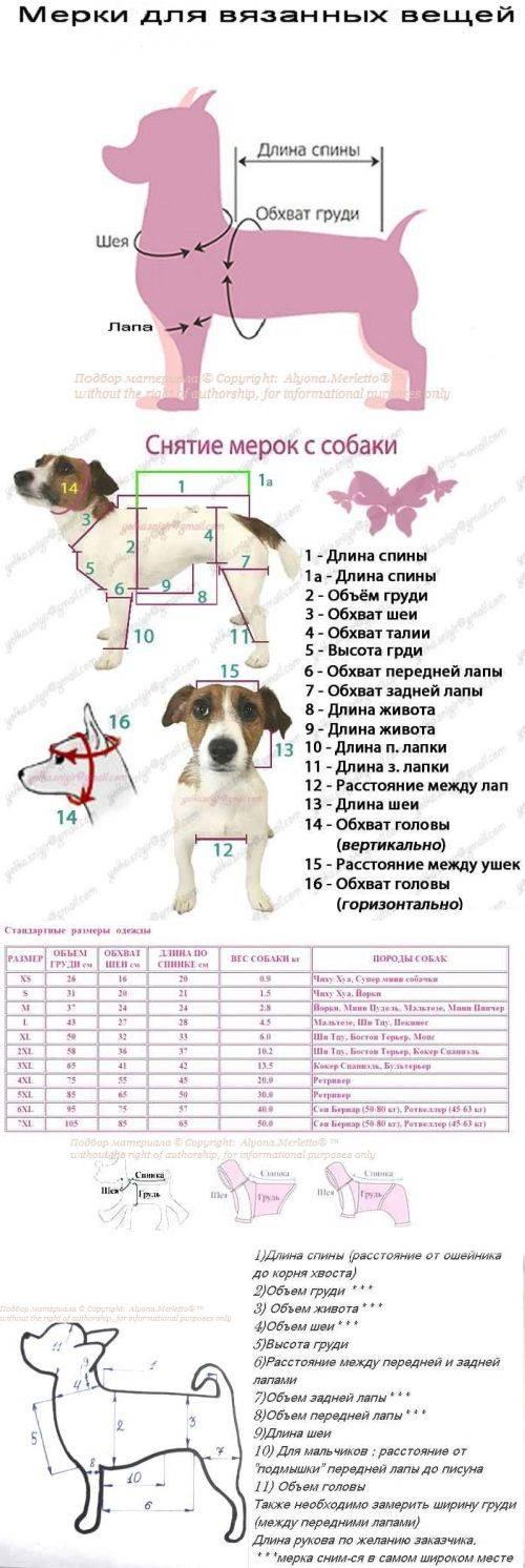 Как определить размер одежды и обуви собаки