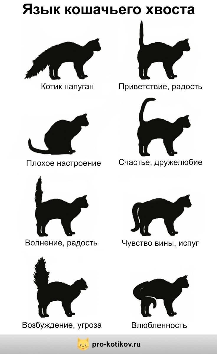 Почему кошка дергает и трясет хвостом, у нее дергается кожа на спине, она нервно вылизывается: причины странного явления