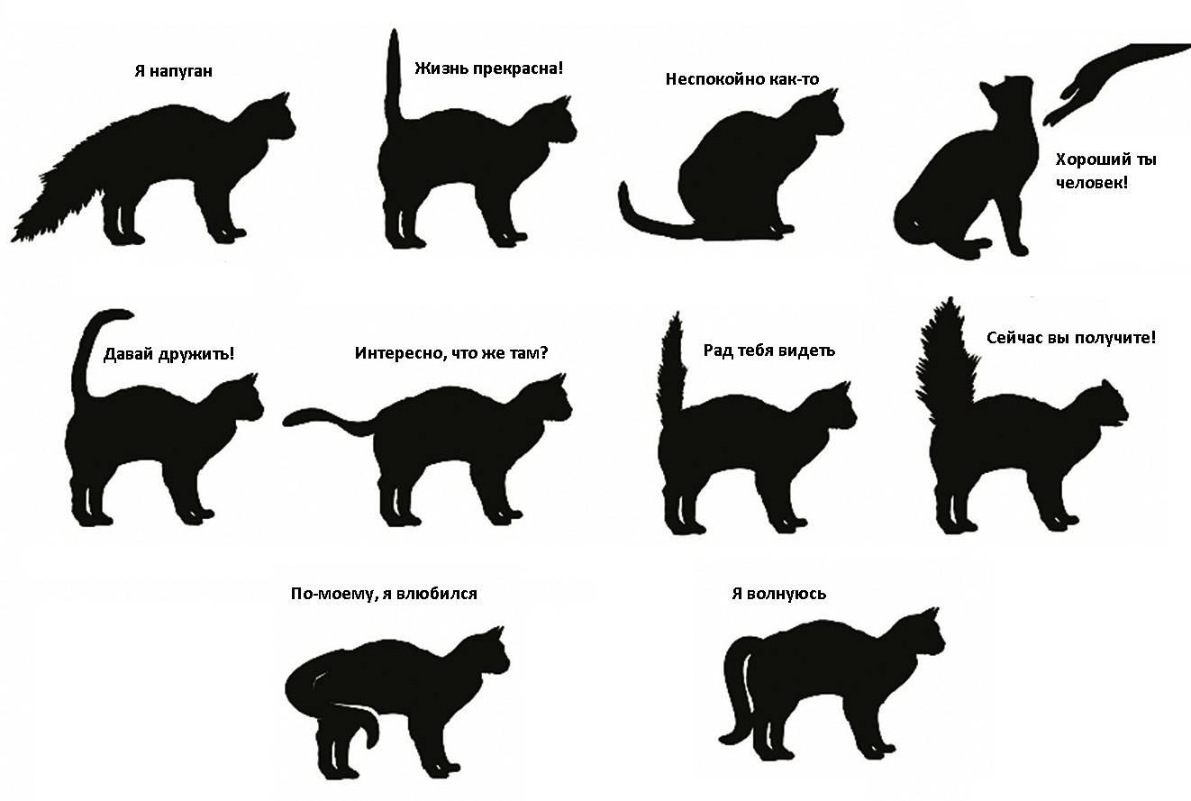 Что влияет на характер кошек ? уход и воспитание