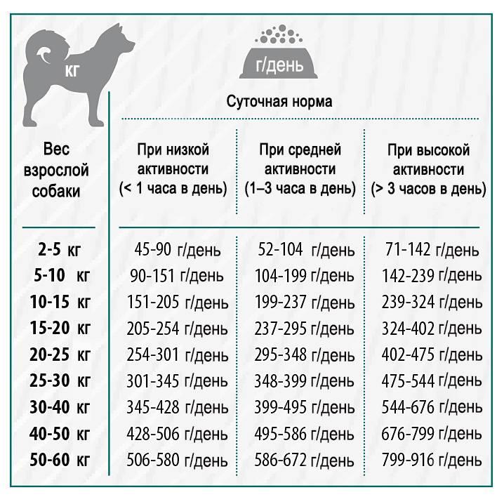 Питание алабая: идеальный рацион для щенков и взрослых собак