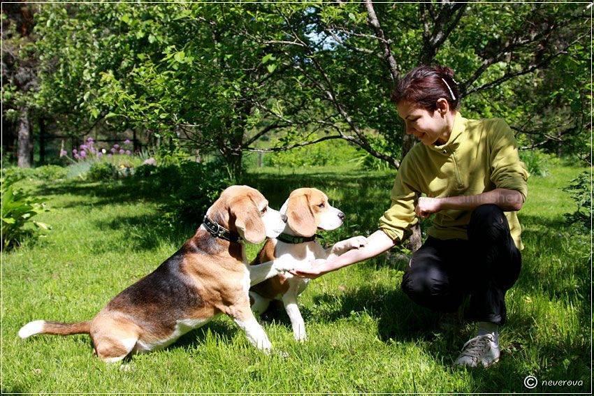 Как воспитать послушную собаку: начальный курс дрессировки