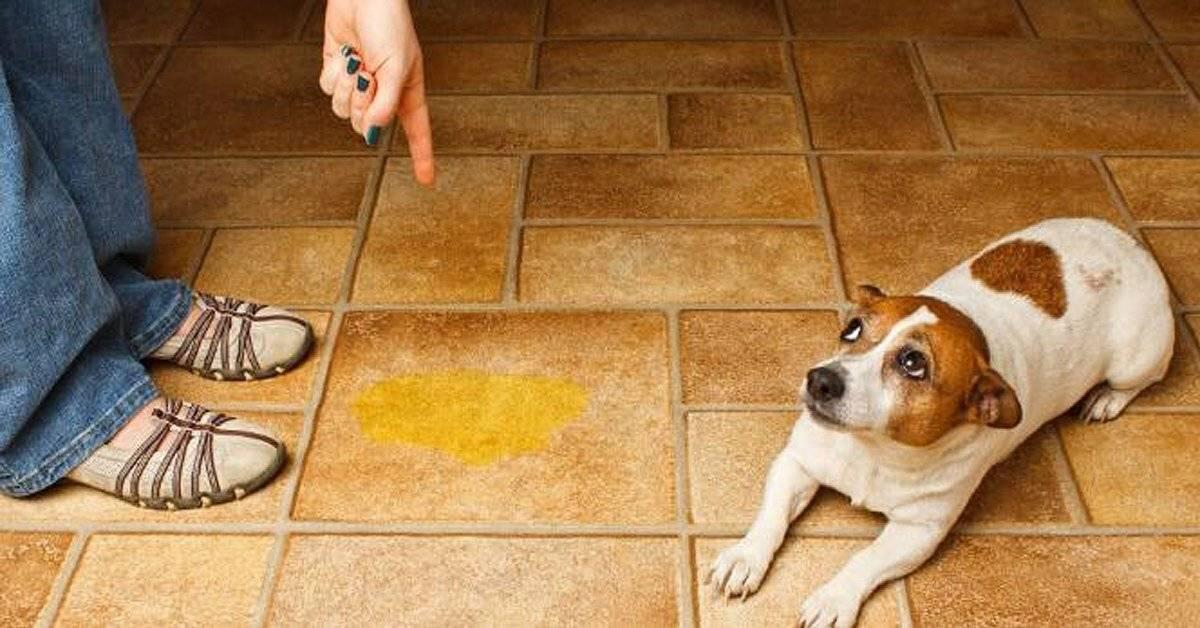 Как отучить собаку гадить в неположенном месте: полезные советы специалиста