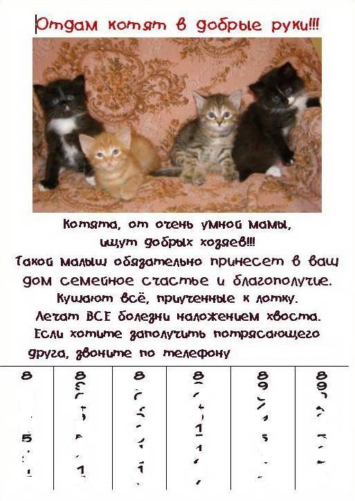Как пристроить кота, кошку или котенка в добрые руки. секреты пиара животных. найти дом для кошки или котенка. инструкция по пиару.