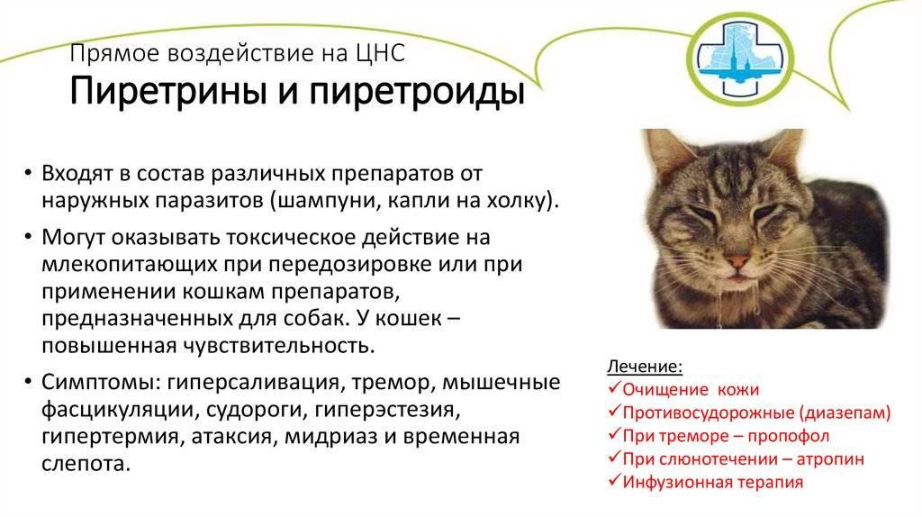 Атаксия у животных. причины, виды и симптомы атаксий