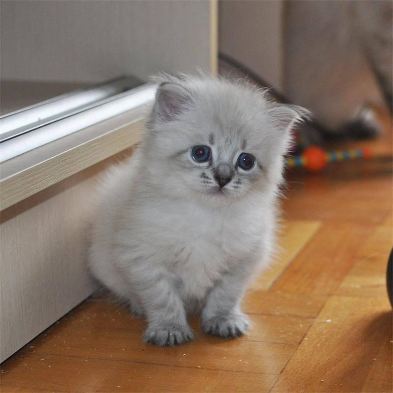 Маленькие домашние животные: список самых маленьких умных питомцев, тех, которые не пахнут и которые долго живут