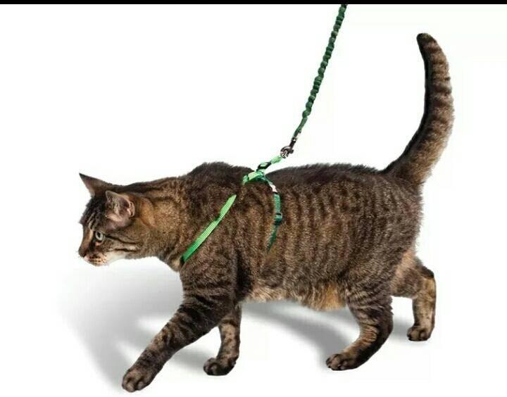 Как сделать шлейку для кошки своими руками: подробная инструкция с фото и видео