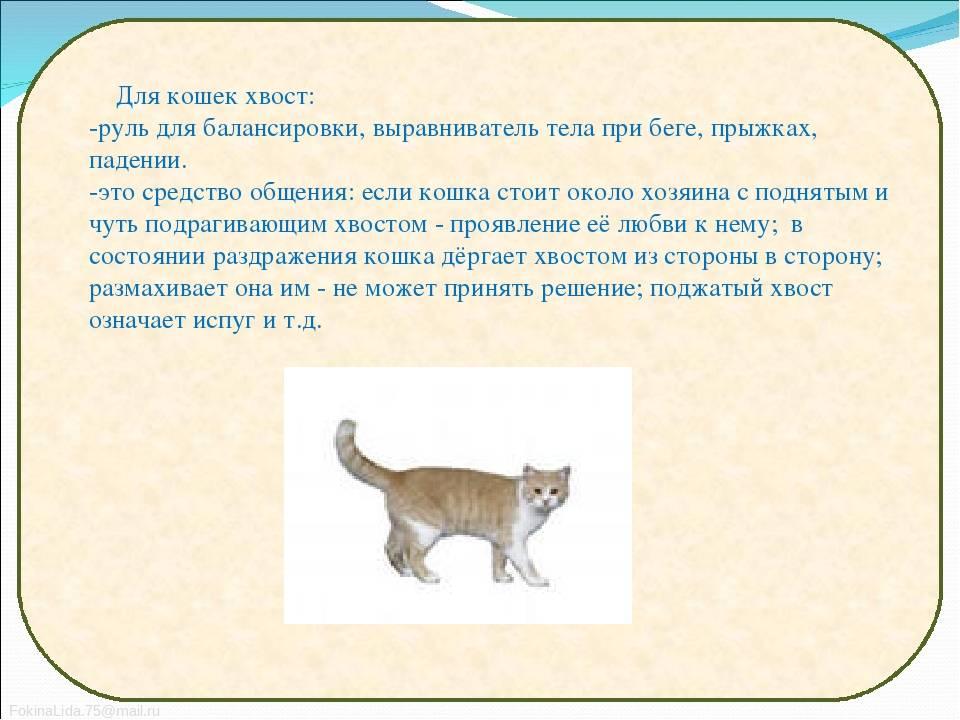 Почему кошки виляют хвостом или как понять своего питомца