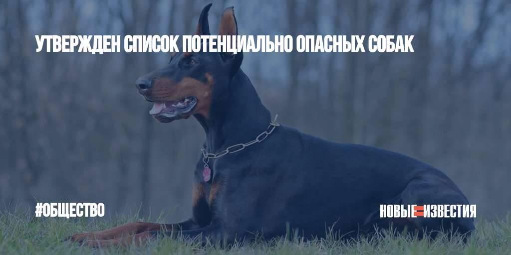 Список опасных собак (97 фото): перечень потенциально опасных пород в россии и в мире. как содержать самых злых собак?