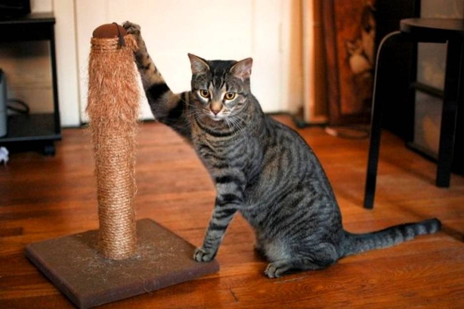 Как отучить кота драть обои: самые эффективные способы