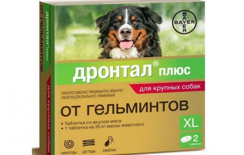 Как понять, что у собаки завелись глисты?