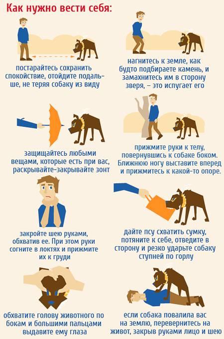 Как действовать при нападении собак: инструкции и правила самообороны, что делать при нападении стаи, самые опасные породы собак