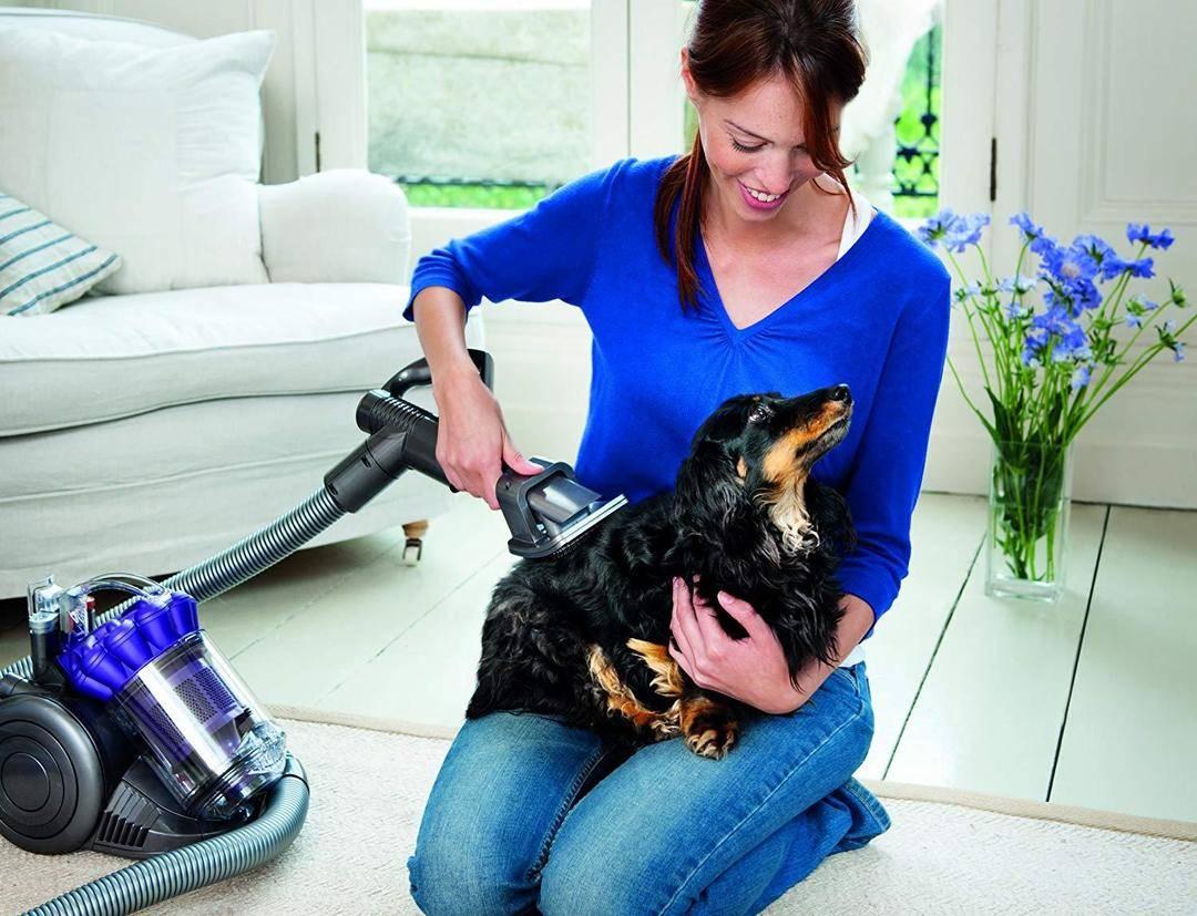 Как избавиться от шерсти кошки и собаки в квартире: советы по уборке