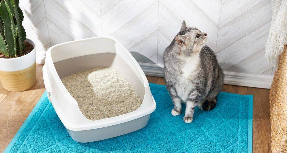 Что делать, если кошка не желает пить воду из миски