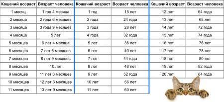 Как определить возраст кота или кошки по внешним признакам — pet-mir.ru